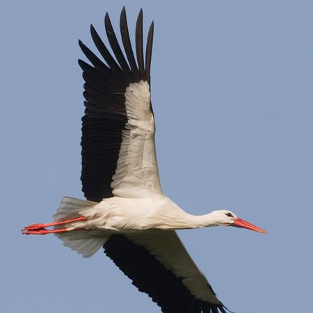 Storks in the city